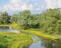 Wiese mit gelben Blumen, Teich Stockfotografie