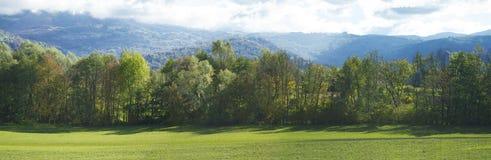 Wiese mit grünem Gras und Bäume mit blauem Himmel im backgroun Lizenzfreie Stockbilder