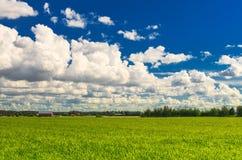 Wiese mit grünem Gras und blauem Himmel Stockfoto