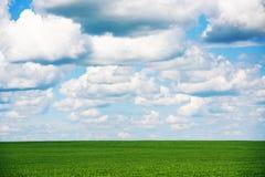 Wiese mit grünem Gras und blauem Himmel mit Wolken Stockfoto