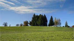 Wiese mit Gras und blauem Himmel Stockbild