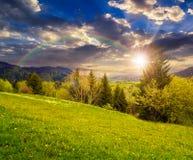 Wiese mit Löwenzahn nähern sich Wald auf Abhang bei Sonnenuntergang Lizenzfreie Stockfotos