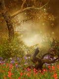 Wiese mit Mohnblumen Stockfotos