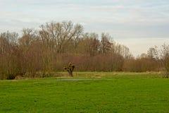 Wiese mit pollarded Weiden-ADN-othehr bloßen Bäumen Stockfotos