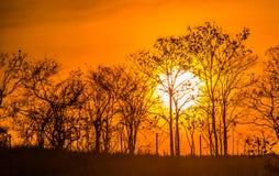 Wiese mit Sonne 6 lizenzfreies stockbild