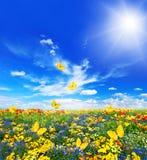 Wiese mit sortierten Blumen und Schmetterlingen Lizenzfreie Stockbilder