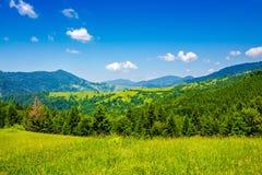 Wiese mit Tannenbäumen auf dem Abhang Lizenzfreie Stockbilder