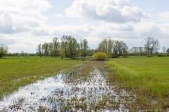 Wiese mit Teich und Bäumen Lizenzfreies Stockbild