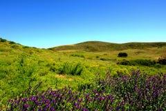 Wiese mit violetten Blumen Stockbild