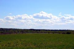 Wiese mit Wald im Hintergrund auf einem Hintergrund des klaren Himmels stockbilder