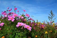Wiese mit wildem Rosa und Flieder färbte Blumen lizenzfreies stockfoto