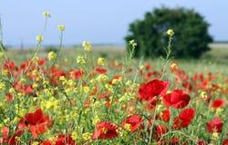 Wiese mit wilden Blumen und Baum Stockfotos