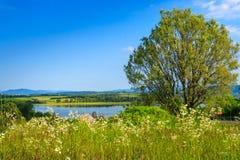 Wiese mit wilden Blumen und ein Baum vor dem See Lizenzfreie Stockbilder