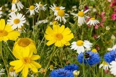 Wiese mit Wildflowers Lizenzfreie Stockfotografie