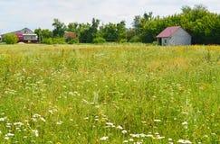 Wiese mit Wildflowers am sonnigen Tag im Juli Lizenzfreies Stockfoto