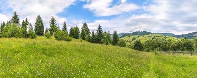 Wiese mit Wildflowers und einer Baumgrenze Stockbilder