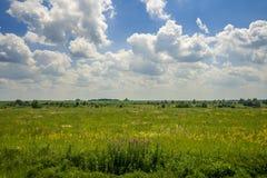 Wiese mit Wildflowers und Iwan-Tee auf dem Hintergrund des hellen blauen Sommerhimmels stockfotos