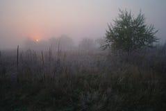 Wiese nahe dem Holz bedeckt mit kaltem nebeligem Morgen des Frosts Lizenzfreie Stockbilder