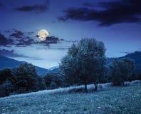 Wiese nahe dem Wald in den Bergen nachts Lizenzfreie Stockfotografie