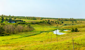 Wiese in Region Bolshoe Gorodkovo - Kursk, Russland lizenzfreie stockfotos