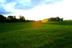 Wiese am Sonnenuntergang Lizenzfreie Stockfotos