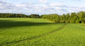 Wiese umgeben durch Wald stockfoto