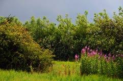 Wiese und Bäume Lizenzfreies Stockbild