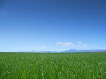 Wiese und blauer Himmel Stockfotografie