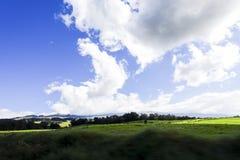 Wiese und blauer Himmel gesehen von der Straße zur Spitze des Haleakala, Maui, Hawaii stockfotos