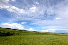 Wiese und blaues syk 3 Lizenzfreie Stockfotografie