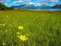Wiese und Blumen in Norwegen Stockbild