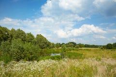 Wiese und ein See im Wald Stockbilder