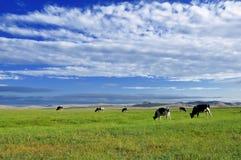 Wiese und Kuh Lizenzfreie Stockfotos