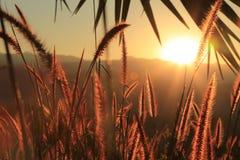 Wiese und Sonnenuntergang Stockfotografie