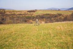Wiese und Standplatz für Heutrockner Stockfotografie