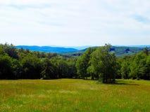 Wiese und Wälder Lizenzfreie Stockfotografie