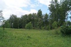 Wiese und Wälder in der Sommerzeit Stockfoto