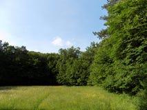 Wiese und Wald Stockbild