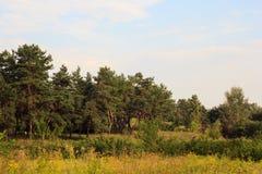 Wiese und Wald am Sonnenuntergang Stockbilder