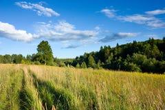 Wiese und Wald unter Sonnenlicht Lizenzfreies Stockfoto