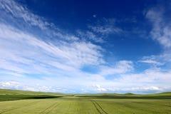 Wiese und Weizen Lizenzfreie Stockbilder