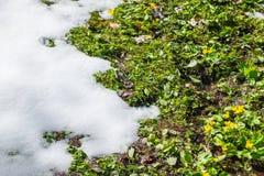 Wiese unter Schnee Lizenzfreie Stockfotos