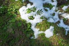 Wiese unter Schnee Stockfotos