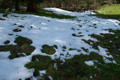 Wiese unter Schnee Lizenzfreie Stockfotografie