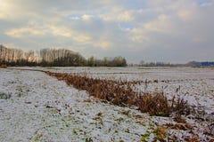 Wiese unter Schnee mit einem Abzugsgraben mit Schilf und Sträuchen und bloße Bäume hinten im Bourgoyen-Naturreservat, Gent, Belgi Lizenzfreie Stockbilder