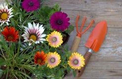 Wiese voll des gelben Löwenzahns Gartenarbeit-Hilfsmittel und Blumen Lizenzfreie Stockfotos
