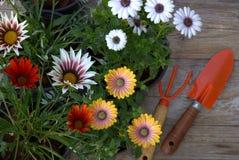 Wiese voll des gelben Löwenzahns Gartenarbeit-Hilfsmittel und Blumen Lizenzfreie Stockfotografie