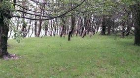 Wiese von Bäumen Stockbild