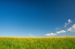 Wiese von gelben Blumen auf Hintergrund des blauen Himmels Lizenzfreie Stockfotografie