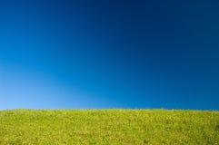 Wiese von gelben Blumen auf Hintergrund des blauen Himmels Lizenzfreies Stockfoto